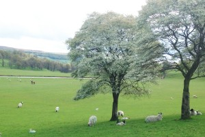 Bomen in de wei